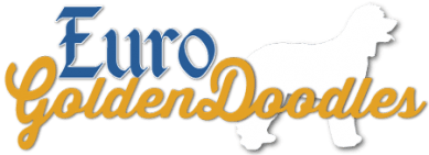 Euro GoldenDoodles Logo- Breeders and Trainers of Quality English Teddybear Goldendoodles