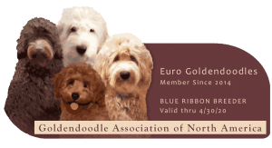 Euro GoldenDoodles is a GANA Blue Ribbon Breeder