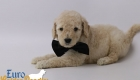 Daisy_Tucker_Jul 2018_Mr. Black 4Weeks (7)