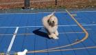 Puppy-Pics-Dec-24-2018_0083