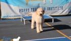 Puppy-Pics-Dec-24-2018_0089