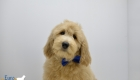 Kami_Amos_Dec2018_14 weeks_Mr Blue (16)