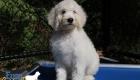 Abby_Tucker_Jul2019_10Weeks_Mr Purple0327 (11)