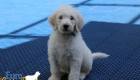 Emma_Tucker_Jul2019_7Weeks_Mr Blue0189 (3)