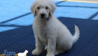 Emma_Tucker_Jul2019_7Weeks_Mr Blue0189 (4)