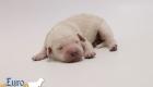 Olive_Bentley_Jun2019_Newborns_3054
