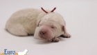 Olive_Bentley_Jun2019_Newborns_3063