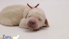 Olive_Bentley_Jun2019_Newborns_3065