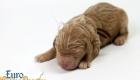 Scarlett_Bentley_Oct2019_Newborn (2)