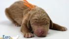 Scarlett_Bentley_Oct2019_Newborn (3)