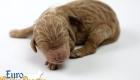 Scarlett_Bentley_Oct2019_Newborn (4)
