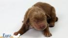 Scarlett_Bentley_Oct2019_Newborn (5)