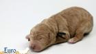Scarlett_Bentley_Oct2019_Newborn (8)