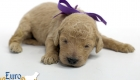 Scarlett_Tucker_Oct2019_2Weeks_Ms. Purple (10)