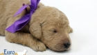 Scarlett_Tucker_Oct2019_2Weeks_Ms. Purple (8)