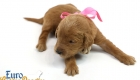 Scarlett_Tucker_Oct2019_2Weeks_Ms.Pink (1)