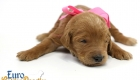 Scarlett_Tucker_Oct2019_2Weeks_Ms.Pink (2)