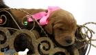 Scarlett_Tucker_Oct2019_2Weeks_Ms.Pink (4)