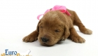 Scarlett_Tucker_Oct2019_2Weeks_Ms.Pink (9)