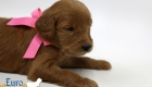 Scarlett_Tucker_Oct 2019_4Wks (10)
