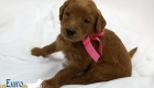 Scarlett_Tucker_Oct 2019_4Wks (13)