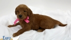Scarlett_Tucker_Oct 2019_4Wks (3)