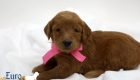 Scarlett_Tucker_Oct 2019_4Wks (4)