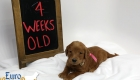 Scarlett_Tucker_Oct 2019_4Wks (6)