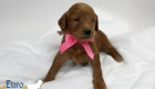 Scarlett_Tucker_Oct 2019_4Wks (8)