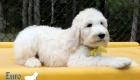Emma_Tucker_Jul2019_10wks_Ms Yellow (4)