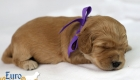 Mia_Apollo_Jan20_2Wks _Ms Purple (2)