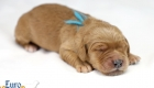 Rosie_Apollo_Jan2020_1wk_Mr Blue (2)