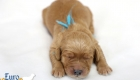 Rosie_Apollo_Jan2020_1wk_Mr Blue (7)
