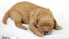 Rosie_Apollo_Jan2020_1wk_Mr Green (2)