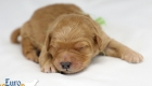 Rosie_Apollo_Jan2020_1wk_Mr Green (7)