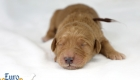 Rosie_Apollo_Jan2020_1wk_Mr. Brown (4)