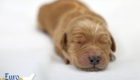Rosie_Apollo_Jan2020_1wk_Ms Orange (3)