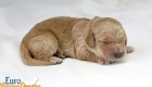 Rosie_Apollo_Jan2020_1wk_Ms Pink (2)