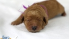 Rosie_Apollo_Jan2020_1wk_Ms Purple (1)