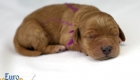 Rosie_Apollo_Jan2020_1wk_Ms Purple (2)
