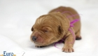 Rosie_Apollo_Jan2020_1wk_Ms Purple (5)