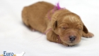 Rosie_Apollo_Jan2020_1wk_Ms Purple (6)
