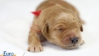 Rosie_Apollo_Jan2020_1wk_Ms Red (5)