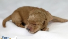 Rosie_Apollo_Jan2020_1wk_Ms Red (7)