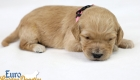 Rosie_Apollo_Jan2020_2wksMs.Peach (1)