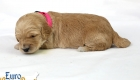 Rosie_Apollo_Jan2020_2wks_M.Pink (1)