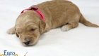 Rosie_Apollo_Jan2020_2wks_M.Pink (2)