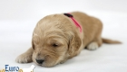 Rosie_Apollo_Jan2020_2wks_M.Pink (3)