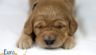 Rosie_Apollo_Jan2020_2wks_Mr Black (2)