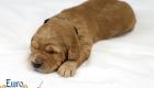 Rosie_Apollo_Jan2020_2wks_Mr Black (4)